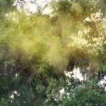 花粉症は活性酸素で悪化する?